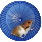 A rodent exercise machine